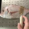 [レシピ]ポイントを押さえれば簡単、保存も可能「鯛(たい)の下処理」