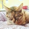 ~譲渡会で猫を迎え入れました。その経緯について綴ります。~
