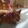 キャティーマン 全身マッサー術 にゃんこの癒しを我が家の愛猫に使ってみた!