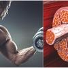 アルギニンと健康(2型糖尿において、血圧と血糖値を低下、インスリン感受性を高め、低糖質食中のタンパク質の異化作用を抑制する)