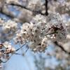 4/6 梅小路公園 お礼