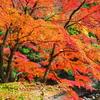 【観光】群馬県南牧村の滝や景勝地を紹介します!
