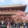東京都心のお花見スポット⑤ 2019年の見頃は?お花見できる観光スポットは?