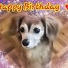 12月はオキラクさんも愛犬も誕生日!