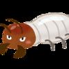 別プロジェクトが始動!床下害虫駆除をしてもらったら、シロアリ被害にあっていたことが判明したよ!
