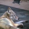 天王寺動物園撮影