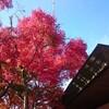 【高尾山】紅葉を見に行ってきたレポ(2019年11月17日)