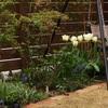 雨後のしっとり庭