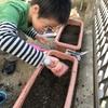 イチゴとスナップエンドウの苗を植えました🌱