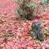 【京都・洛北】散り紅葉も綺麗な圓光寺。一乗寺ラーメンの後にもぴったり!