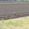 カモかもしれない鳥と・耕運機・田んぼの水はりの法則および2、3のもんだい