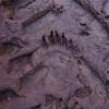 55.熊と人と環境を考える