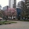 桜サク~大通公園
