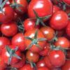 トマトの鉢上げをしました。