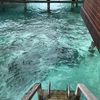 モルディブ、水上コテージの魅力とは、アナンタラヴェリ
