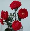 赤い薔薇の切花
