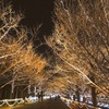 イルミネーション 昭和記念公園