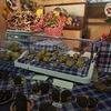 イタリア・アルバ:秋に開催されるトリュフ祭に度肝を抜かれた話【観光おすすめ情報・秋】
