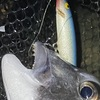 ラパラF9改による…夜の干潟チヌのトップウォータープラッキングゲーム