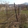 ワイン体験レポート「4月」 Vol.1
