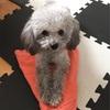 北京で犬と暮らし始めて、1年が経ちました!