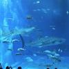 7月6日天気が悪かったので沖縄美ら海水族館へ行って来ました