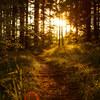「ノルウェーの森」を読む