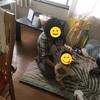 GW:岡山から高知、徳島 ~徳島から神戸へ 05/05~