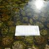 下鴨神社で水占い -みずみくじ-