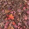 2020/12/12 小石川植物園(東京大学大学院理学系研究科附属植物園)