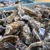 景色も綺麗で牡蠣食い放題!移住候補地ナンバーワン!(焼きがきハウス)