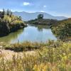 上人池(和歌山県紀の川)