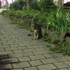 今日の景色 07/05 猫