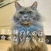 歯磨きさせてくれない猫にオススメしたい!デンタルバイオとキャットマウスクリーナー