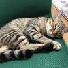 【猫ブログ】サラは甘いものがお好き。