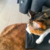 【愛猫日記】毎日アンヌさん#147