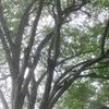 ◆'18/09/09     雨の県立自然博物園ガイドウォーク②