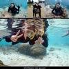 ダイビング&シュノーケルを楽しむ
