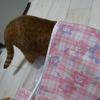 猫さん、収納袋に夢中