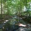 【アメリカで人生初☆キャンプ】大自然に癒された大人の週末