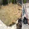 【芝の成長と手入れ】手動芝刈り機と芝刈りハサミで伸びきった芝を処理