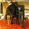 プリント(Elephant)