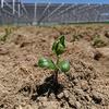 ソーラーシェアリング:ソーラーシェアリング設備下での作物生育の研究をスタート - 三重大学梅崎教授との共同研究