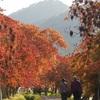 むかちんと九州(博多)へ旅行😃✨🍁