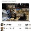 8月後半の #ねこ #cat #猫 どらやきちゃんA