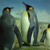 『皇帝ペンギン ただいま』のフル動画を無料で視聴するおすすめの方法!