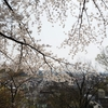 あの場所の桜を見たくて気がついたら新幹線にとび乗って見た景色