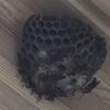 浜松市北区で壁面に出来た蜂の巣を駆除してきました!