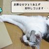 猫の道具 ~さらに工作~