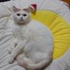 【猫様ニュース】年末だし大掃除に疲れた時にお勧めの猫様画像多数